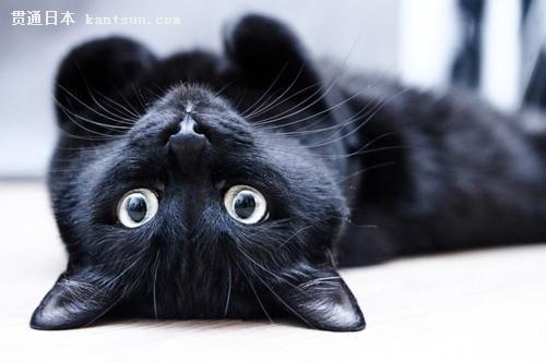 日本名作赏析:夏目漱石《我是猫》